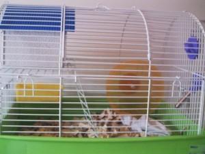 hamster con jaula y todo