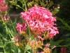 Mantencion de jardines,Paisajismo,Diseño de jardines