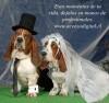 fotos eventos, matrimonios, fotografia profesional & video