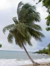 Playa Punta Cana, República Dominicana. 103,000 M2 o 25 acres a U$D40/acre