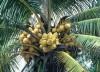 Punta Cana 8238 metros cuadrados o 2 acres a U$D35/M2