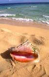 Playas Macao-Punta Cana.  2 millones de metros o 500 acres en República Dom